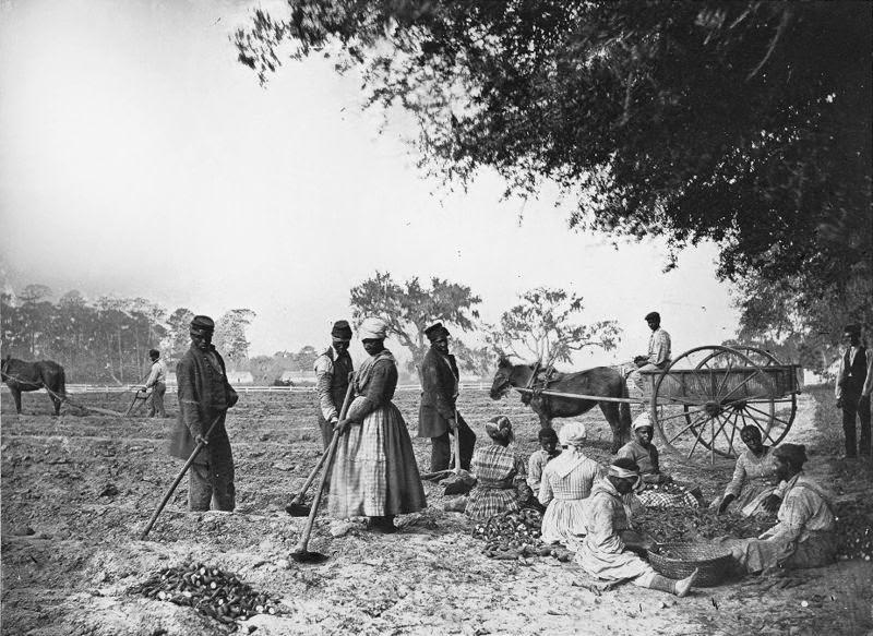 Bertasi: schiavi e padroni